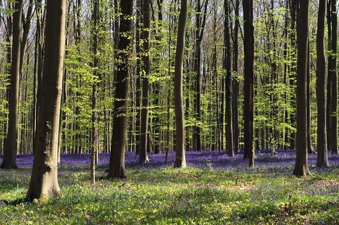 Il venerdì nella foresta
